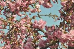 Frühling im Keramikgarten