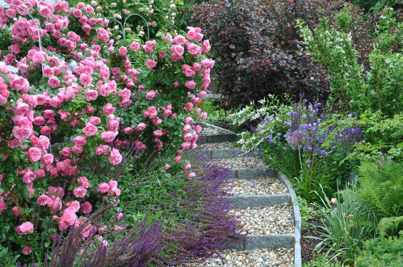 Rosen im Keramikgarten
